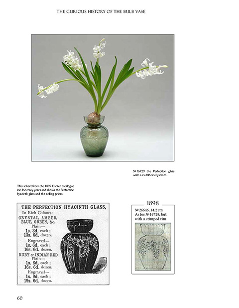 Hyacinth Bulb Vases Glasses In Bloom A Comprehensive Site
